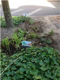 Adopteer een straat - plantjes