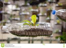 plant in plastic fles.jpg