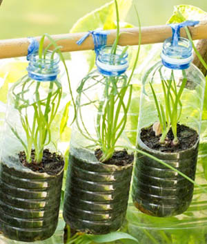 plantjes kweken in plastic 5.jpg