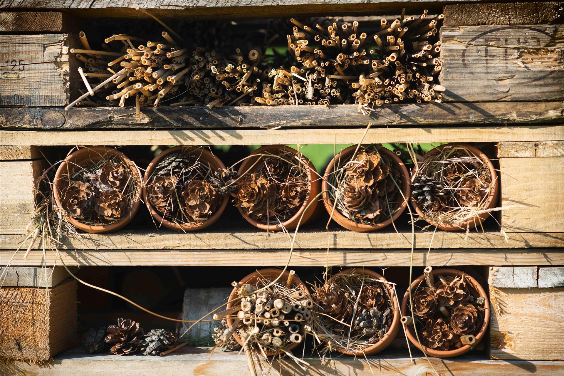 Duurzaam_Meerhoven_cheque170524_BDJ4470_insectenhotel.jpg