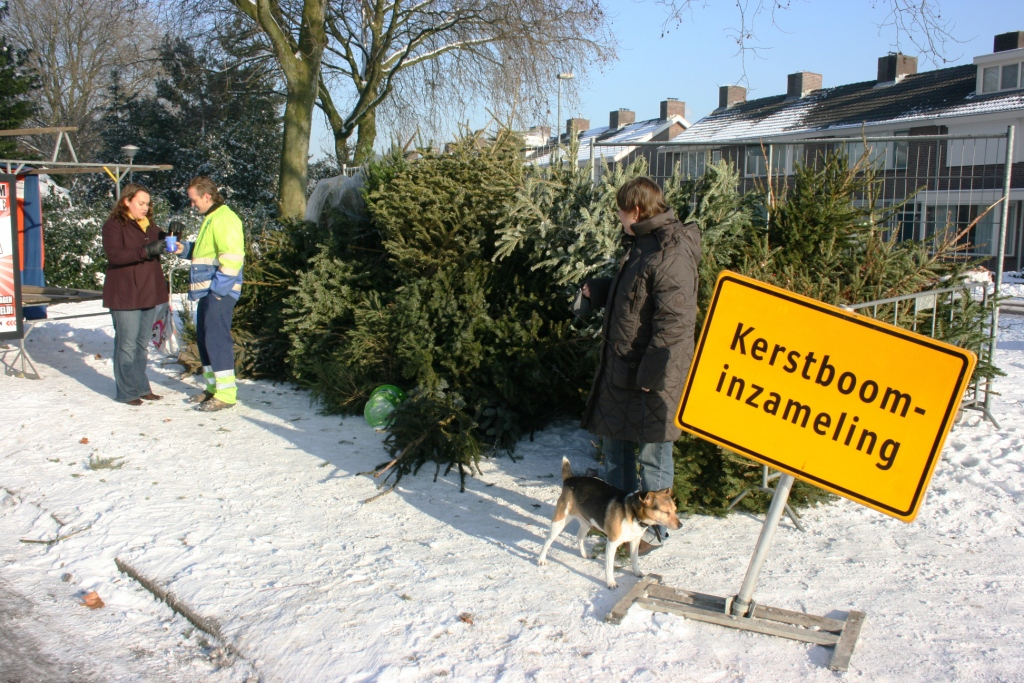 kerstboominzameling_5857a_ad smets.JPG