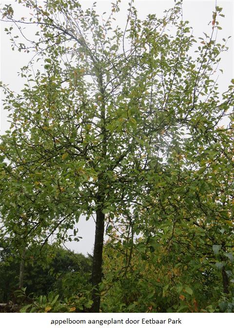 04 appelboom aangeplant door Eetbaar Park.jpg