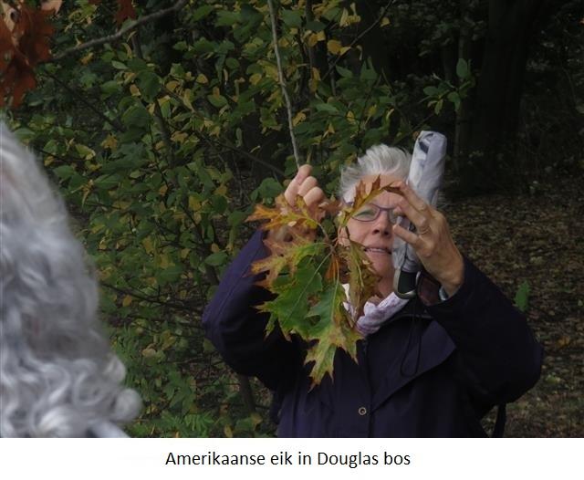 21 Amerikaanse eik in Douglas bos.jpg